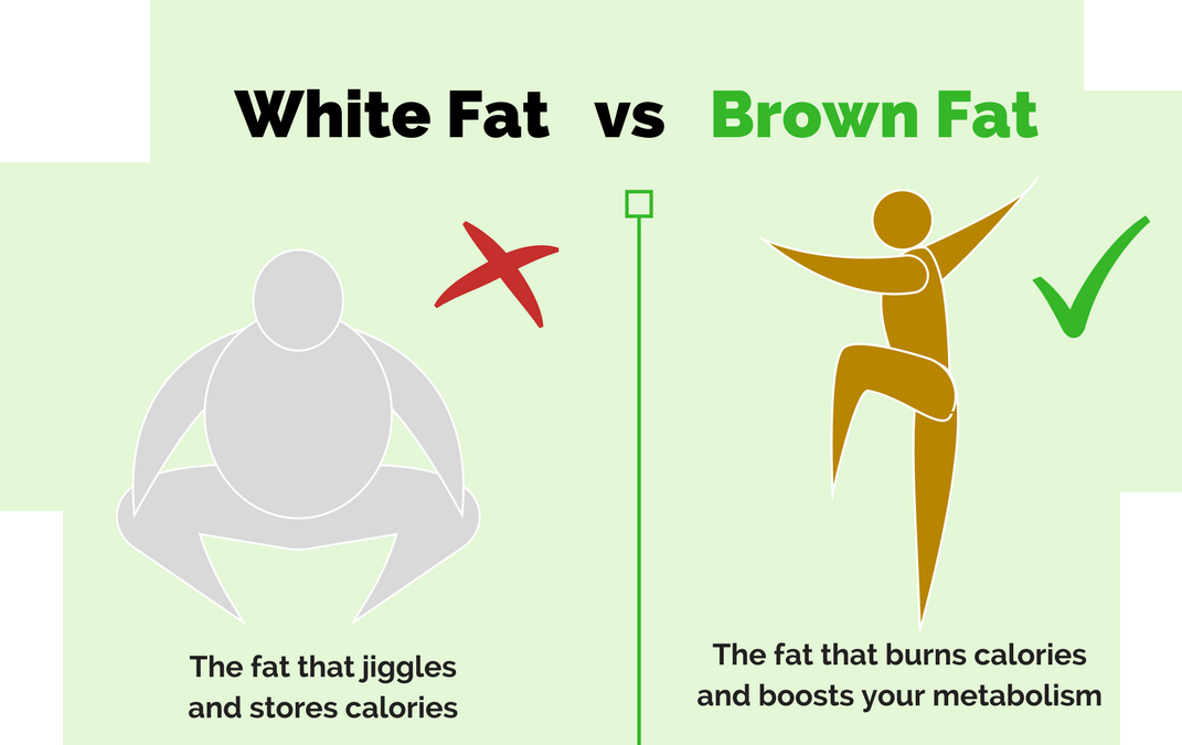 What Is White Fat and Brown Fat, and can CBD Help?