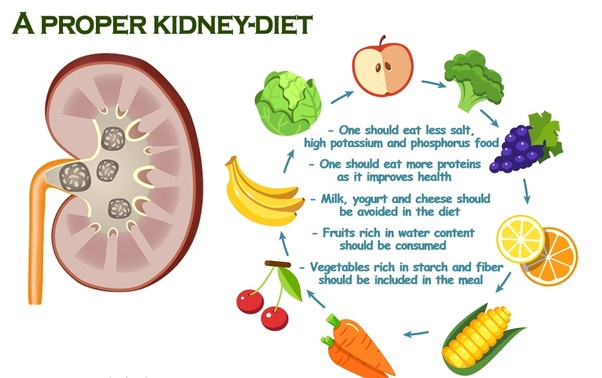 Does Weight Control Impact on Kidney Function?